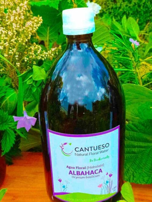 CANTUESO Hidrolato de ALBAHACA 1000ml