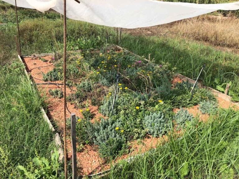 Estudio Tejados Verdes - CANTUESO - Natural Seeds