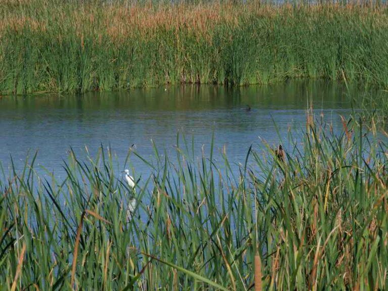 Fitodepuración de Aguas - CANTUESO - Natural Seeds
