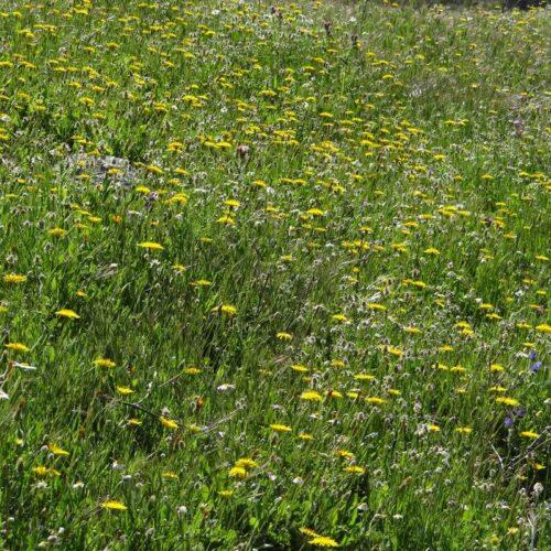 Foto de Jardín Atlántico - CANTUESO - Natural Seeds