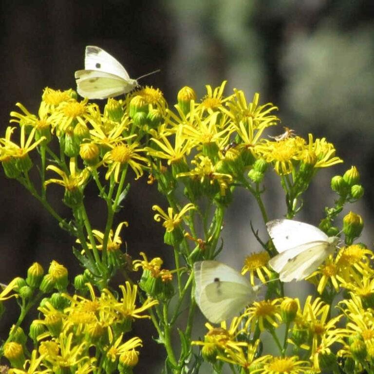Foto Jardín Polinizador - CANTUESO - Natural Seeds