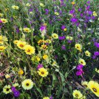 Foto de Jardín de Flores Mediterráneas de Bajo y Medio Porte - CANTUESO - Natural Seeds