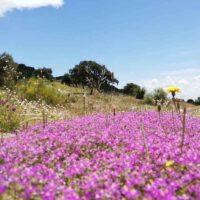 Foto de Jardín de Flores Rosadas - CANTUESO - Natural Seeds