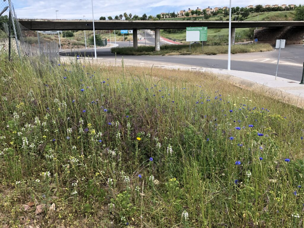 Jardinería urbana - CANTUESO - Natural Seeds