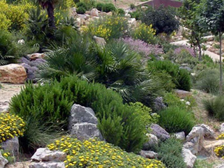 Jardinería Mediterránea - CANTUESO - Natural Seeds