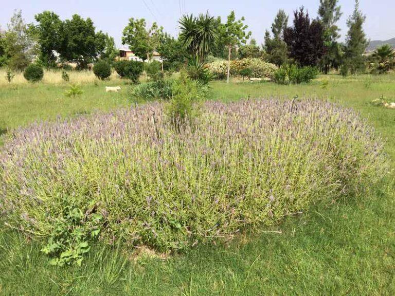 Jardinería Periurbana - CANTUESO - Natural Seeds