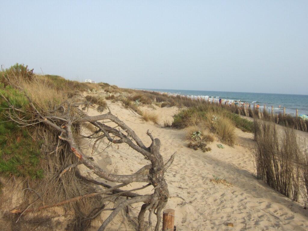 Paisaje dunar. Punta Umbría - CANTUESO - Natural Seeds