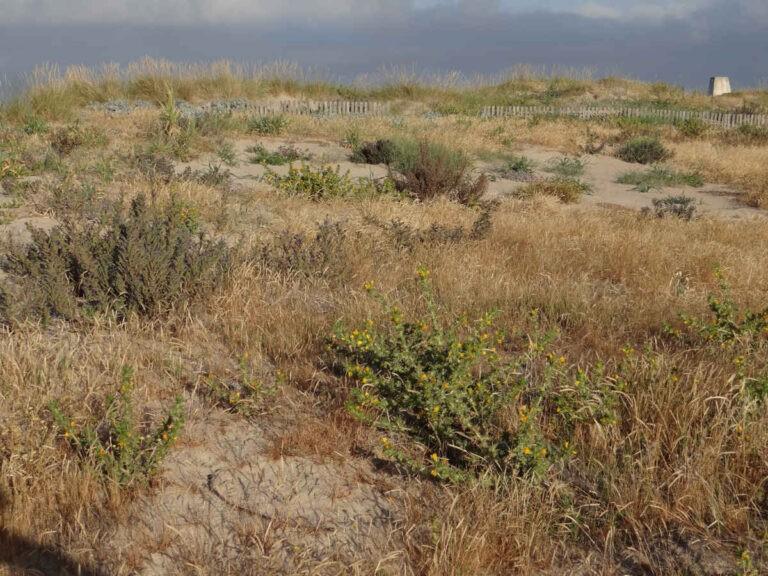 Playa Formentera - CANTUESO - Natural Seeds