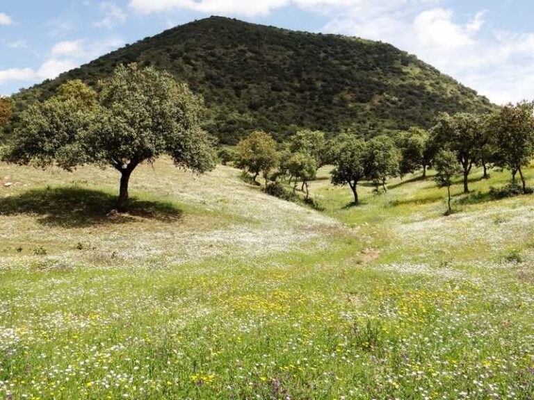 Pradera Mediterranea - CANTUESO - Natural Seeds