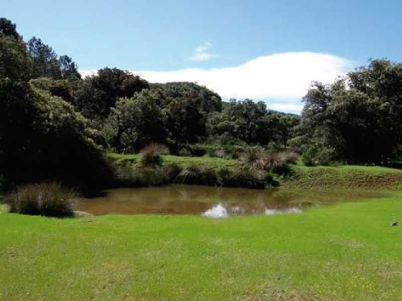 Praderas en Zonas de Humedales - CANTUESO - Natural Seeds