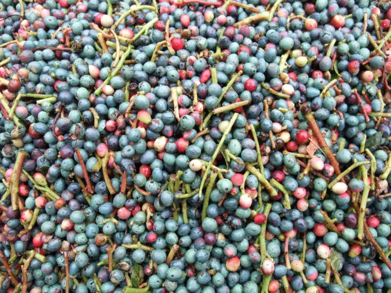 Procesado y Selección de Semillas - CANTUESO - Natural Seeds
