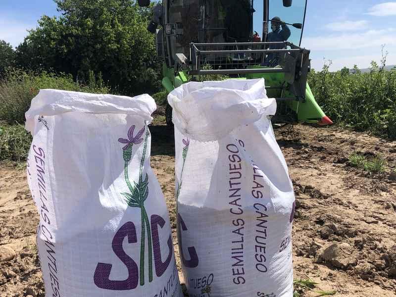 Producción y Multiplicación Ecológica-de-Semillas - CANTUESO - Natural Seeds