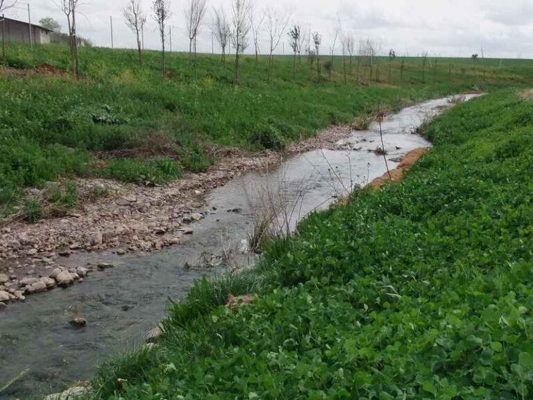 Restauración Paisajística - CANTUESO - Natural Seeds