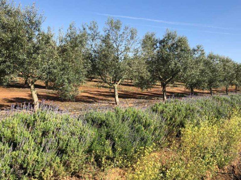 Setos y Linderos de Biodiversidad - CANTUESO - Natural Seeds