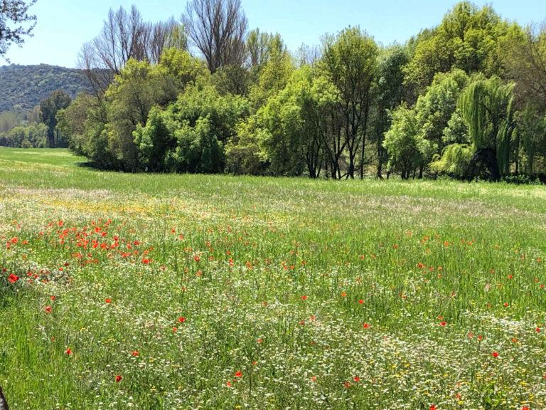 Zonas Encharcadas - CANTUESO - Natural Seeds