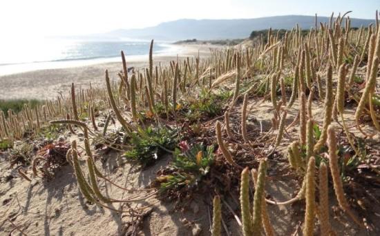 Zonas Salinas - CANTUESO - Natural Seeds